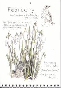 2月スノードロップスのじゅうたん - ブルーベルの森-ブログ-英国カントリーサイドのライフスタイルをつたえる