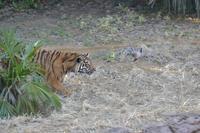カリの狩り - 動物園へ行こう