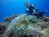 ウミガメに大接近の体験ダイビング! - 石垣島てぃだダイビングサービス