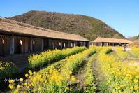 菜の花とラ・コリーナ - 「古都」大津 湖国から