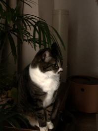 睡眠品質 - いぬ猫フェレット&人間