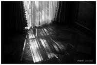 カーテン越しの光 - BobのCamera