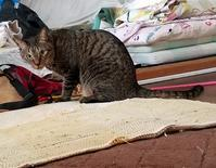呼んだ? - キジトラ猫のトラちゃんダイアリー