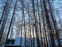 今季最低マイナス21℃カンタベリー周辺の木々も霧氷に・・ - 十勝・中札内村「森の中の日記」~café&宿カンタベリー~