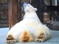 動物園3 - *ジカンのキリトリ*