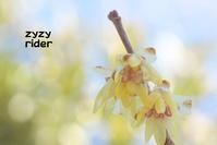 冬空の彩り(その12) - ジージーライダーの自然彩彩