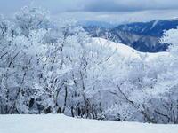 美しき樹氷林を後に下山開始綿向山 (1,110M) - 風の便り