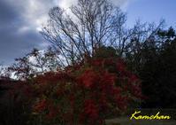 冬の平城宮跡 - カンちゃんの写真いろいろ