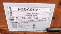 2016.4.1 ノーザンホースパーク☆トウカイポイント【Tokai Point】 - 青空に浮かぶ月を眺めながら