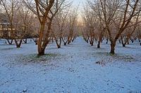 初積雪 - ひな日記