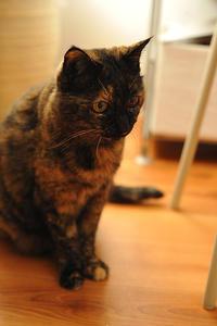 腎臓の悪い猫のご飯・イースター 療法食 ベッツセレクション 腎ケア 猫用 BPレーベル ビーフ(感想レビュー) - ほんじつのトムさん