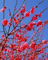春は梅から - 十色生活