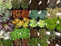 観葉植物の入荷情報です♪♪ - ブレスガーデン Breath Garden 大阪・泉南のお花屋さんです。バルーンもはじめました。