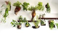 きになる植物 - ポスドクの憂鬱