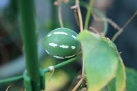 球形の可愛い3色の実とセツブンソウ - さんじゃらっと☆blog2