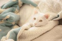 おかえりーおやすみー - Omoブログ