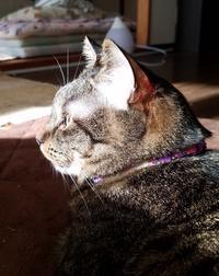 日向が - キジトラ猫のトラちゃんダイアリー