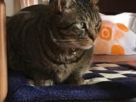 猫の体重測定! - いととはり