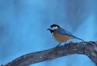 雪絡み - 今日も鳥撮り