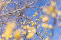 野川自然観察園あたりの風景 - 柳に雪折れなし!Ⅱ