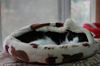 おニューなベッド#11・後編 - Black Cat Moan