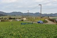 緑のじゅうたん畑の風景 - 素顔のままで