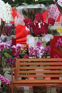 岩舟町真冬の撮影会は暖かいところで~とちぎ花センター 鑑賞大温室~ - 日々の贈り物(私の宇都宮生活)
