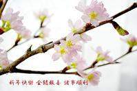 春節 - Miwaの優しく楽しく☆