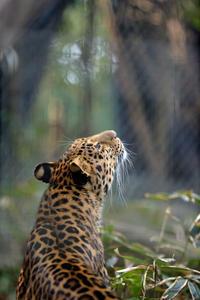 祈り - 動物園へ行こう