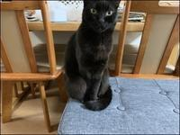 もしも猫の謝罪会見があったなら - あずきのばあばの、のんびり日記