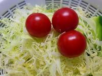 「トマトからの~ トマト」 - そーすっこ2