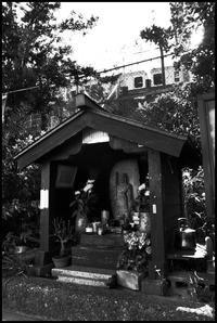 中野-37 - Camellia-shige Gallery 2