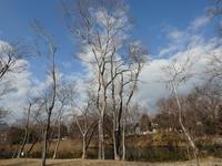 『河跡湖公園で出逢ったもの達~』 - 自然風の自然風だより