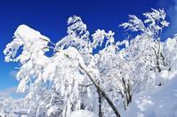 面白山の樹氷-7 - 自然と仲良くなれたらいいな2