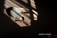陽だまりミントちゃん - 今が一番