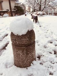待望の積雪日のお好み焼き! - ワタシの呑日記