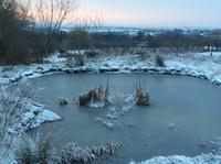 2月2日 イモック - イギリス ウェールズの自然なくらし