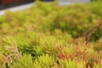 恵比寿遠足 - 相模原・町田エリアの写真サークル「なちゅフォト」ブログ!