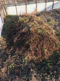 堆肥の仕込 - Salad Days