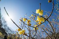 節分の神代の花たち - 柳に雪折れなし!Ⅱ