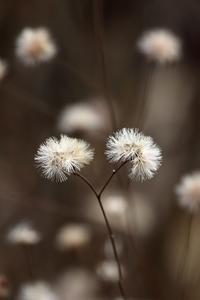冬の忘れ物 - miyabine's フォト日記2~身の周りのきれい・可愛い・面白い~