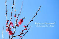 Plum blossom - Light or Darkness?
