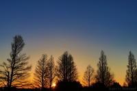 森林公園の夕景 - Light or Darkness?