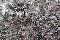 梅と雪 - 今日の空+α2