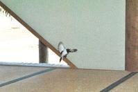 「鬼は外!」「鳥は内?」 - 千葉県いすみ環境と文化のさとセンター