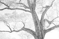 モノクロ風景妙高高原笹ヶ峰キャンプ場 - 光 塗人 の デジタル フォト グラフィック アート (DIGITAL PHOTOGRAPHIC ARTWORKS)