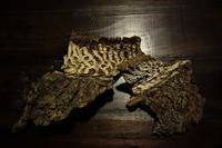 クラロ接ぎ木部分の樹皮 - SOLiD「無垢材セレクトカタログ」/ 材木店・製材所 新発田屋(シバタヤ)