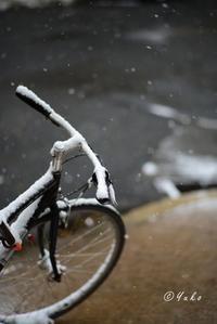 自転車 / Bike - Seeking Light - 光を探して。。。