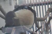 節分の日もパンダはよく寝て、よく食べる - 山とPANDA