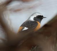 野鳥3種 - 絵と庭